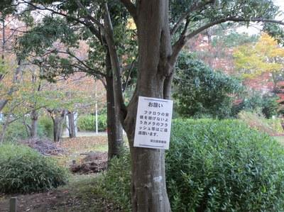 fukurou_201311_3.jpg
