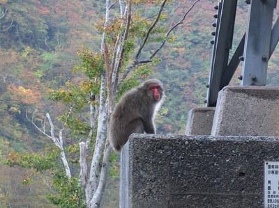 kazekurayama_01.jpg