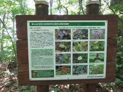 kugamiyama_tigo_21.jpg