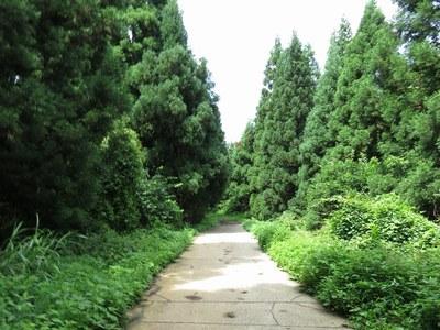 yoneyama_oodaira_44.jpg